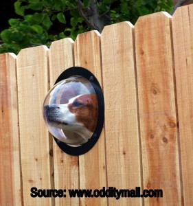 pet-peek-fence-window-for-dogs-0